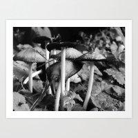 b&w mushrooms Art Print