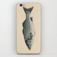 A Fish iPhone & iPod Skin