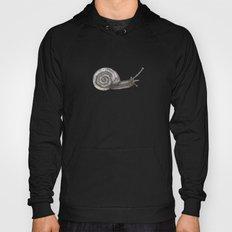 A snail named Benjamin Hoody