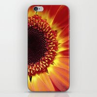 Harvest Sunflower iPhone & iPod Skin