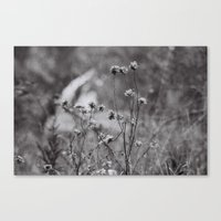 Wilting Flowers Canvas Print