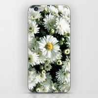 Daisy Dandy iPhone & iPod Skin