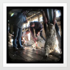 The Shearer and The Rouseabout - Through The Viewfinder (TTV) Art Print