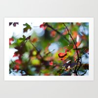 Autumn Rainbow Art Print