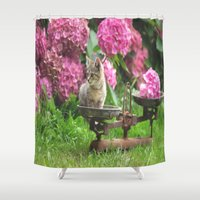 Little Tiger on the scales Shower Curtain