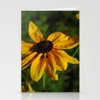 Black Eyed Susans Stationery Cards