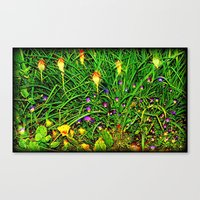 Red Hot Pokers Canvas Print