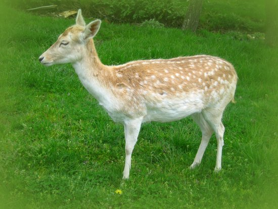 Oh Deer Canvas Print