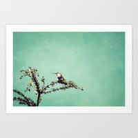 Hummingbird at rest Art Print