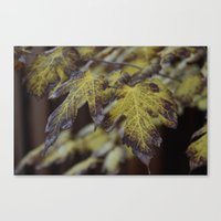 Late Arrival Canvas Print