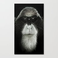 Debrazza's Monkey  Canvas Print