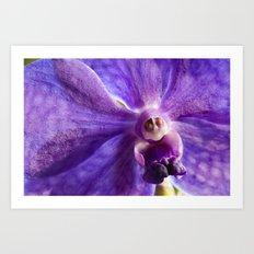 Orchid Vanda 91 Art Print