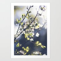 Backlight Blooms Art Print