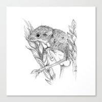 Harvest mouse Canvas Print