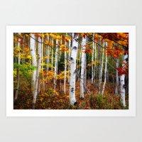 Acadia Fall Color Art Print