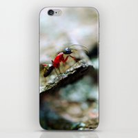 Ant Insect Photography, … iPhone & iPod Skin