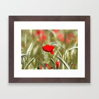 Hot Poppy Framed Art Print