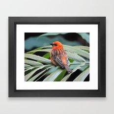 Bye Little Bird Framed Art Print