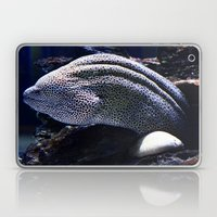Honeycomb Moray Eel Laptop & iPad Skin