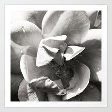 Black & White Rose Art Print