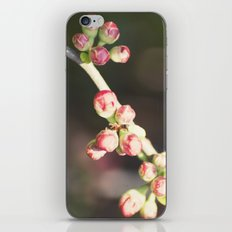 red buds iPhone & iPod Skin