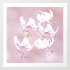 White lilies with pink background Art Print