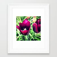 Purple Tulips in Bloom Framed Art Print
