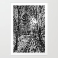 The Forest Path Art Print