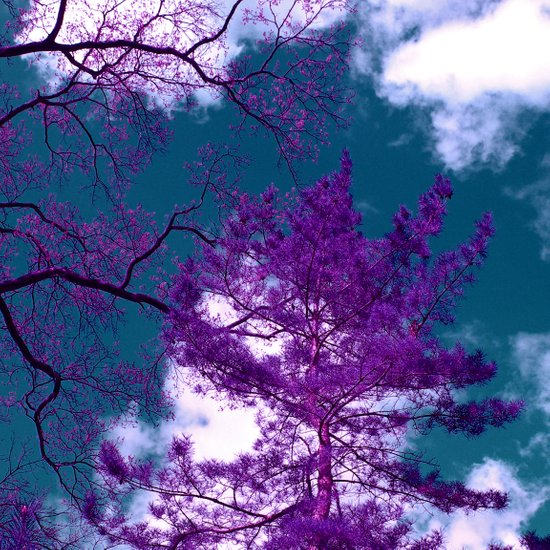 purple fir-tree II Art Print