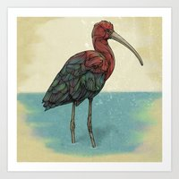 Ibis Art Print