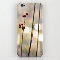 Sunset Lake iPhone & iPod Skin