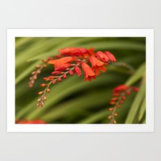 Blooming Reds Art Print