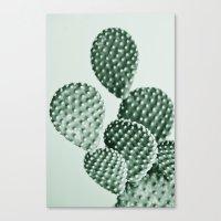 Green Bunny Ears Cactus  Canvas Print