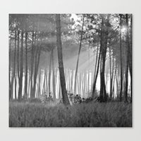 lumineuse brume Canvas Print