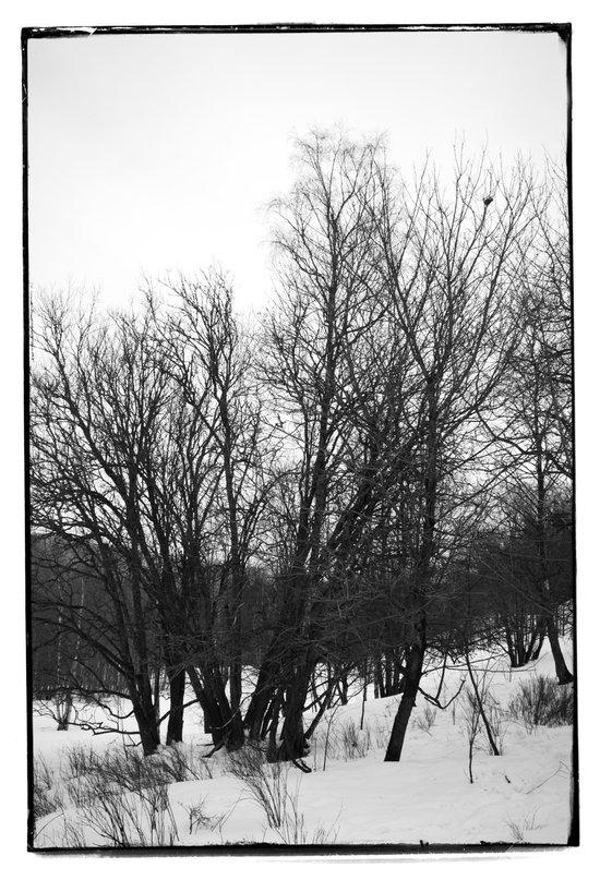 Norwegian forest VI Art Print