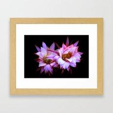 Purple cactus blossom Framed Art Print