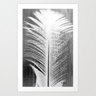 ✔️White And Grey Fea… Art Print