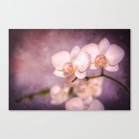 the white orchid - violet texture Canvas Print