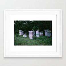 Bee Boxes Framed Art Print