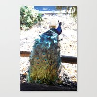 Show Off Canvas Print