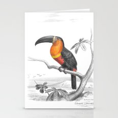 Toucan Illustration Stationery Cards