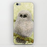 Northern Spotted Owls iPhone & iPod Skin
