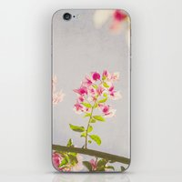 Dreamy Bougainvilleas iPhone & iPod Skin
