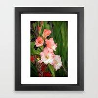 Gladioli Framed Art Print