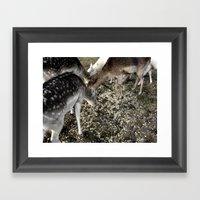 Roe Deer  Framed Art Print