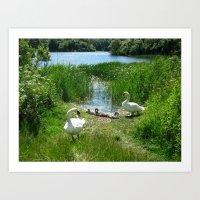 Bosherston Lily Ponds.Pe… Art Print