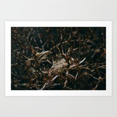 After The Snow Lifted Art Print