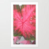 Big Leaf Art Print