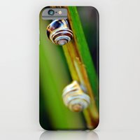 Climbing Up the Stalk iPhone 6 Slim Case