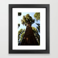 General Sherman Trunk to Treetop Framed Art Print